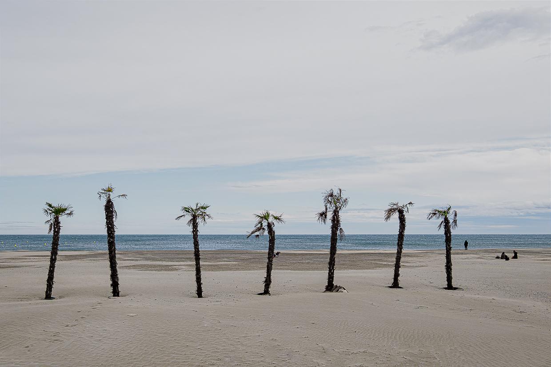 Photographie de Michel Rey prise à Port-La-Nouvelle dans l'Aude. Elle représente une vue de la plage avec sept palmiers plantés dans le sable